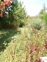 le jardin de Giroflée 2 - Page 18 Fleurs21