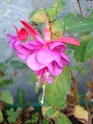 le jardin de Giroflée 2 - Page 18 Fleurs30