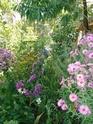 le jardin de Giroflée 2 - Page 18 Fleurs32