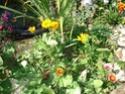 le jardin de Giroflée 2 - Page 18 Fleurs38