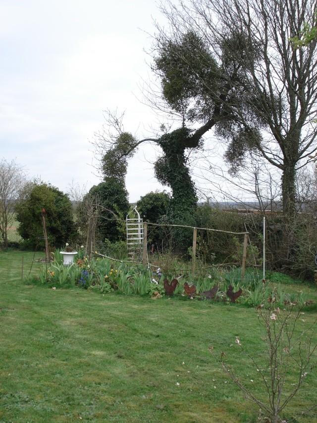 le jardin de Giroflée 2 - Page 2 Travau38