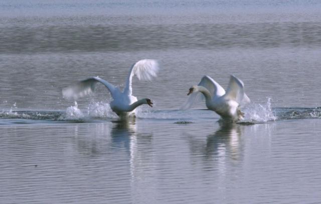 Animaux, oiseaux... etc. tout simplement ! - Page 6 Base710