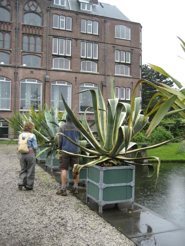 Leiden, Hollande 2008 Carnif32