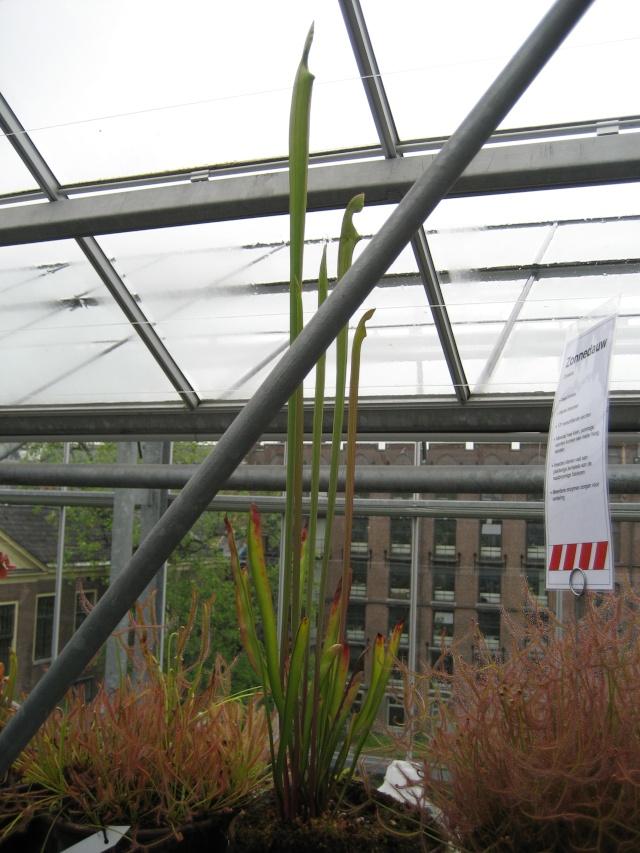 Leiden, Hollande 2008 Carnif45