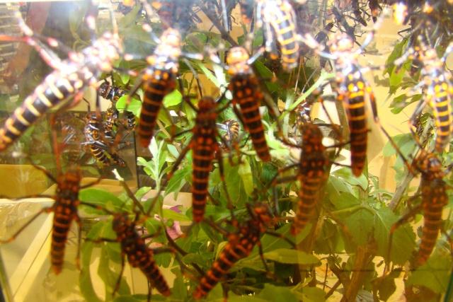 Verrières le buisson, 2008 Dsc02212