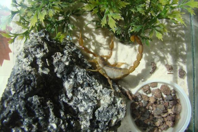 Verrières le buisson, 2008 Dsc02218