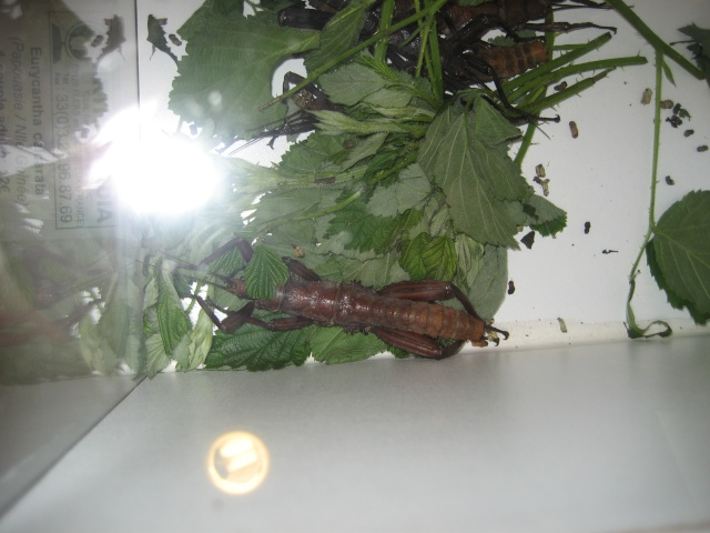 Verrières le buisson, 2008 Expo_s29