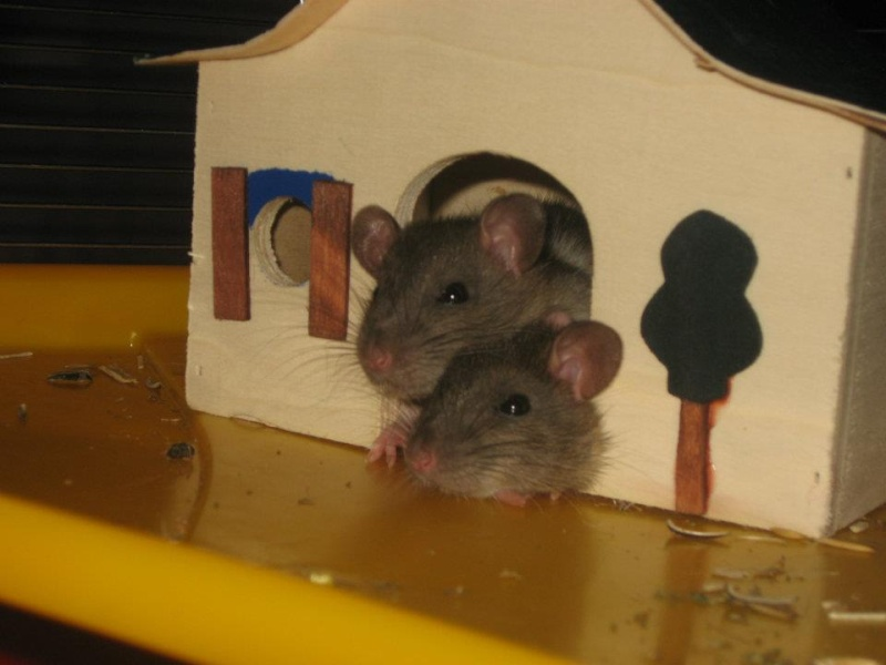 Frimousse & Fripouille Rats_d10