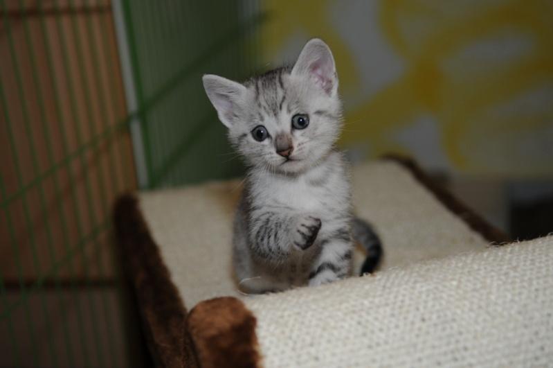 Les chatons de Vendémiaire. Dsc_5811