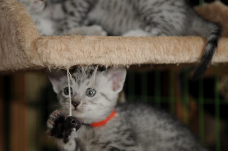 Les chatons de Vendémiaire. Dsc_5910