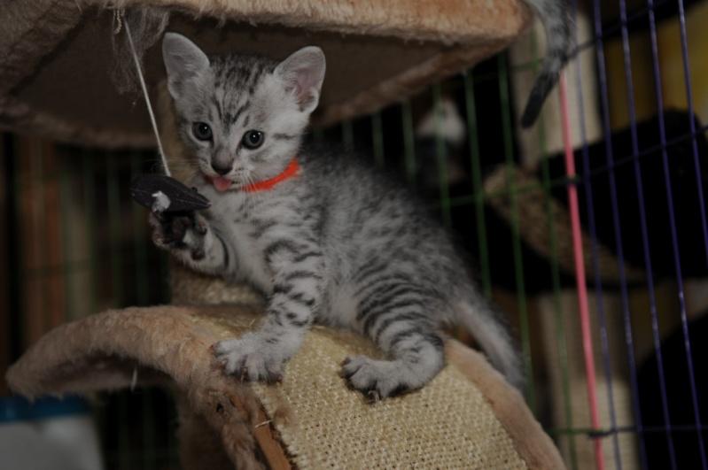 Les chatons de Vendémiaire. Dsc_5911
