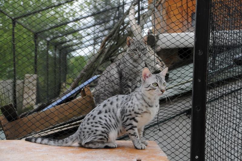 E'Sethi Accuente, le chaton voyageur - Page 6 Dsc_9510