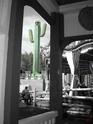 [13.04.2008] Fraispertuis-City (Ouverture) Cactus10