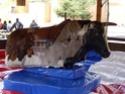 [13.04.2008] Fraispertuis-City (Ouverture) Rodeo110