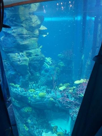 l'Aquarium du Morocco Mall 20111111