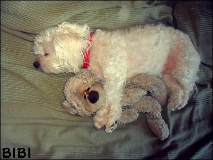 Bibi, mon amie la plus fidèle :) Z10