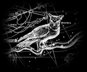 Cygnus Project Noctua10