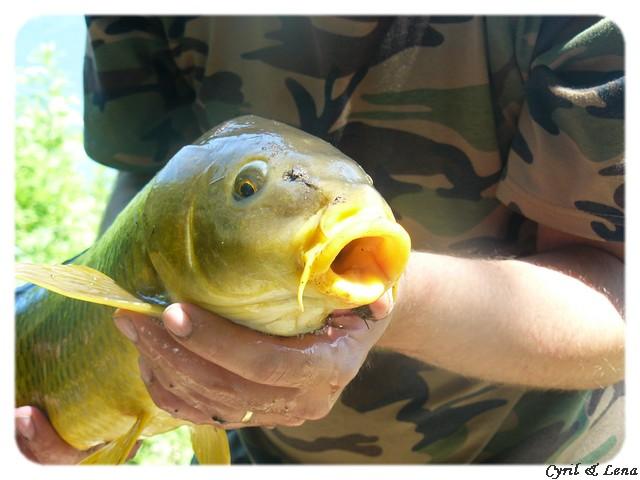 Vos journées de pêche 2008 ! - Page 5 P1020712