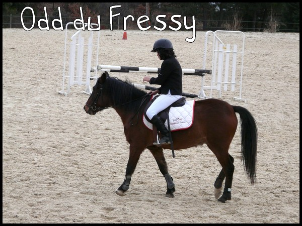 Box d'Odd du Fressy•Club P1010310