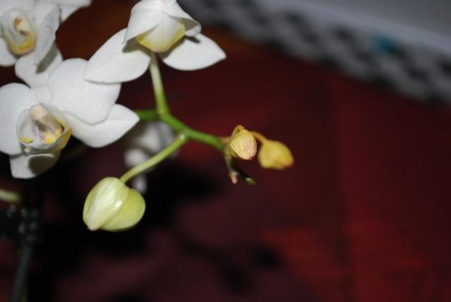 Les orchidées de Bev' Dsc_0058
