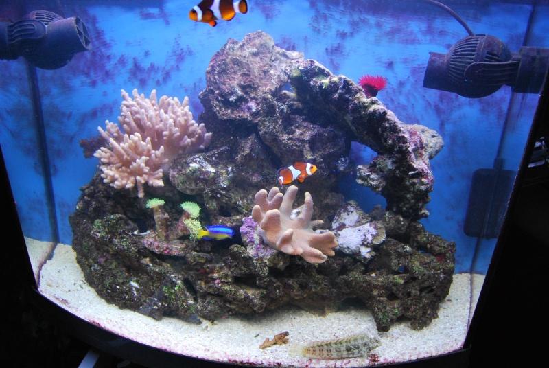 "Mon  ReefPlus 105L ""djedje02"" - Page 2 Dsc_0735"