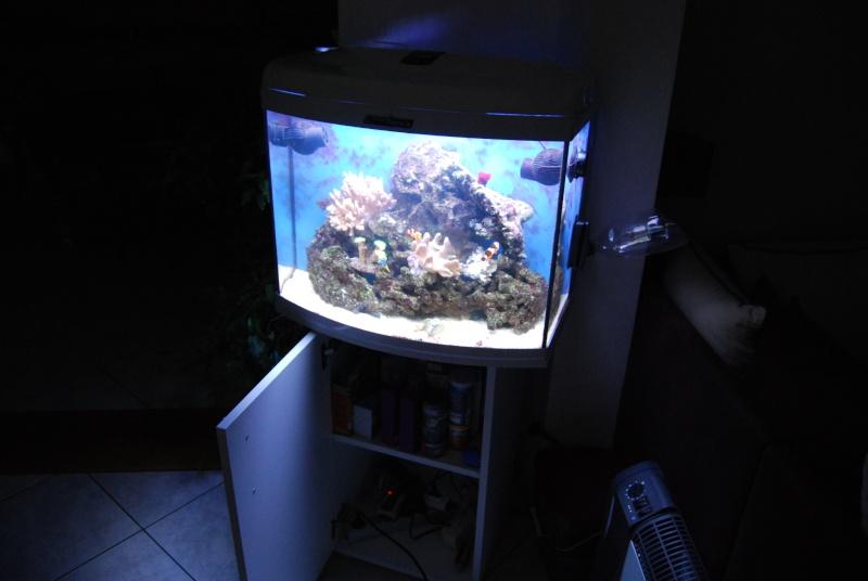 "Mon  ReefPlus 105L ""djedje02"" - Page 2 Dsc_0738"