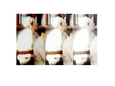 Une mystérieuse dame blanche photographiée dans une église - Page 2 Compar10