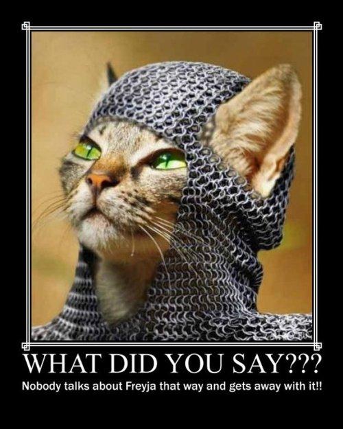 Chats chez les viking Chats_10