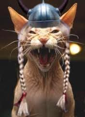 favoris des Vikings, il était d\u0027usage d\u0027offrir des chatons lors des  mariages. Y avait il aussi des chats Valkyrie, la j\u0027ai un doute mais des  photos