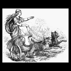 Chats chez les viking Freyja10