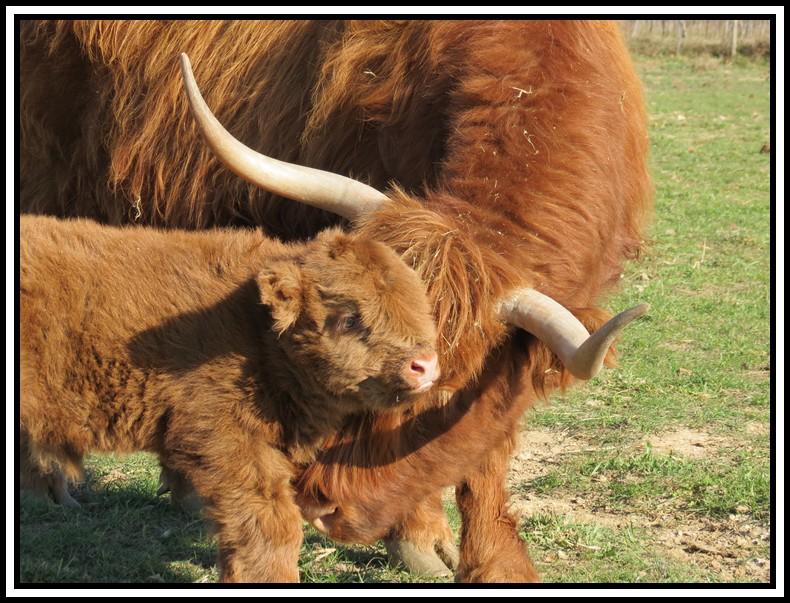 les naissances de noël Photo_41