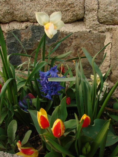 Le temps à Madelonnet du mois d'Avril 2008 1186