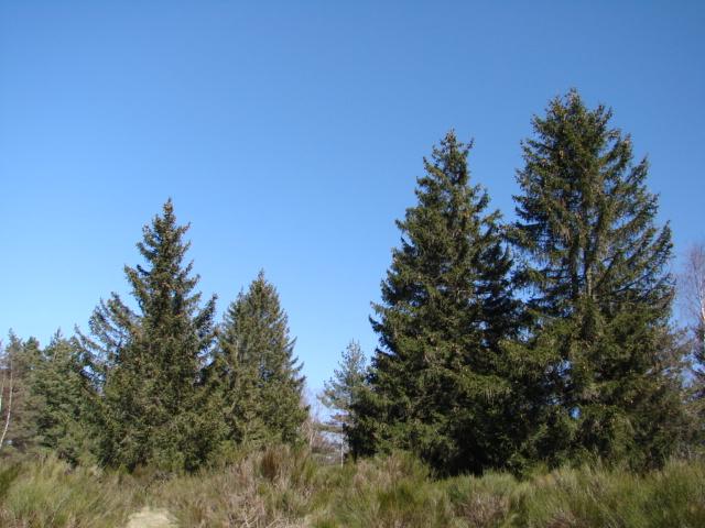 Le temps à Madelonnet du mois d'Avril 2008 1217