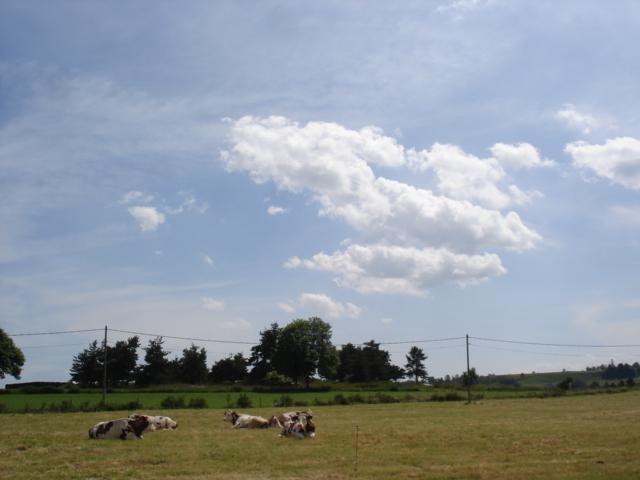 Le temps à Madelonnet du mois de Juillet 2008 1648