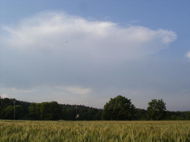 Le temps à Madelonnet du mois de Juillet 2008 1649