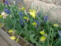 Le temps à Madelonnet du mois d'Avril 2008 20081083