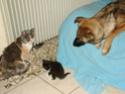 Le temps à Madelonnet du mois d'Avril 2008 20081114