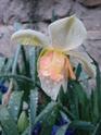 Le temps à Madelonnet du mois d'Avril 2008 20081126
