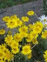 Photos de la nature, été 2008 - Page 3 20083157