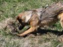 Le temps à Madelonnet du mois d'Avril 2008 2008_957