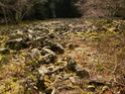 Le temps à Madelonnet du mois d'Avril 2008 2008_994