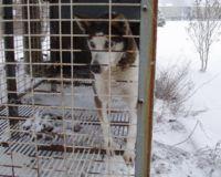 Libérez Peppy qui a vécu 9 ans dans une cage !! 66477910