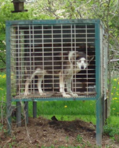 Libérez Peppy qui a vécu 9 ans dans une cage !! Svjg4710