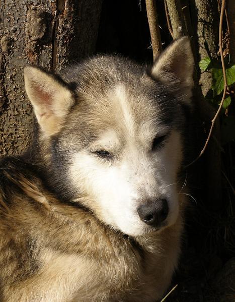 URBAN husky (m) spa vannes (ref56)DECEDE - Page 5 Urbanx10