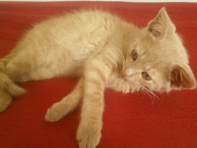 Je vous présente mon chaton : Ambre Img10110