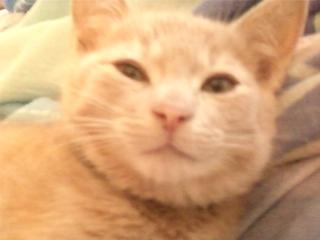 Je vous présente mon chaton : Ambre Img13911