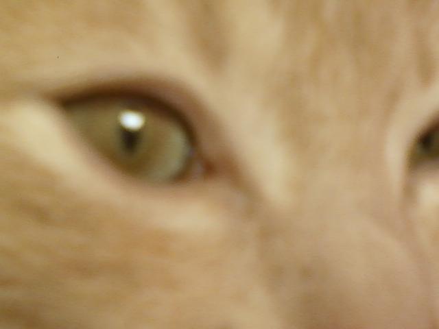 Je vous présente mon chaton : Ambre Img5c910