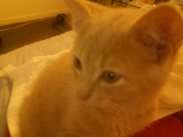 Je vous présente mon chaton : Ambre Imgba511