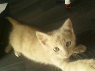 Je vous présente mon chaton : Ambre Imgc6015