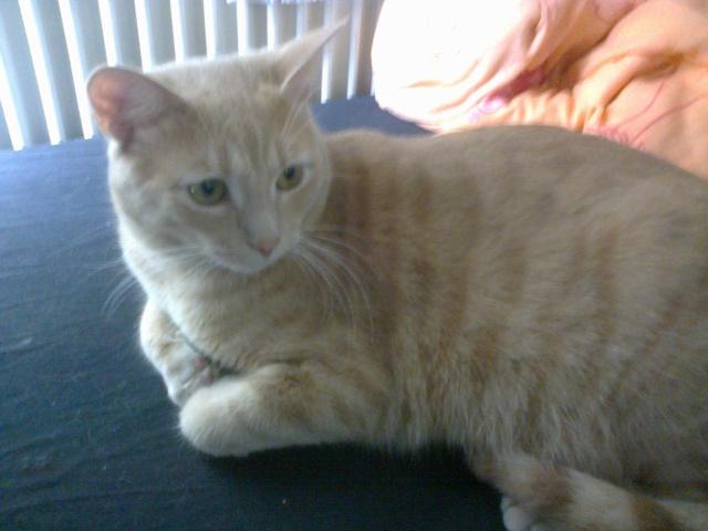 Je vous présente mon chaton : Ambre - Page 3 Photo015